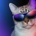 cat-cool