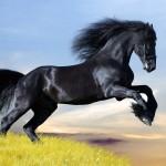 horsey-mamma