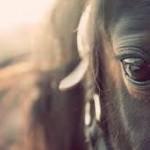 ilovehorses123