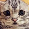yourcat