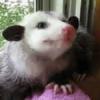Party-Opossum