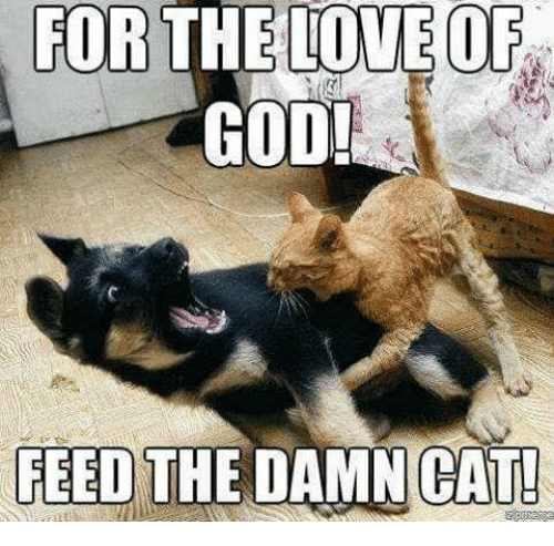 Feed the damn cat by uknowitzcasey