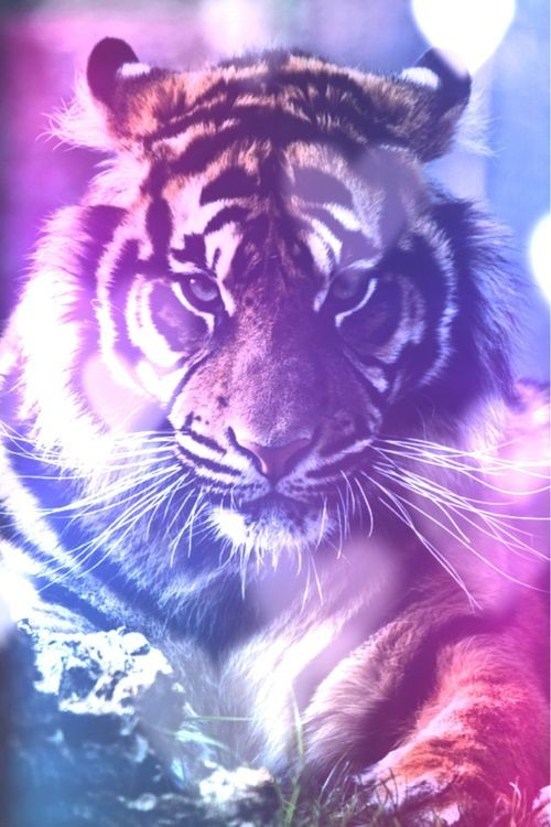Galaxy Tiger by DrawingMaster