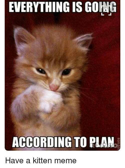 Image result for kitten meme