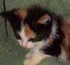 Kittens >:3 by CrimsonCotton